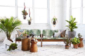 Haal groen in huis met planten