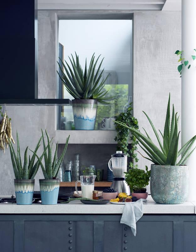 De beste planten voor in jouw huis2
