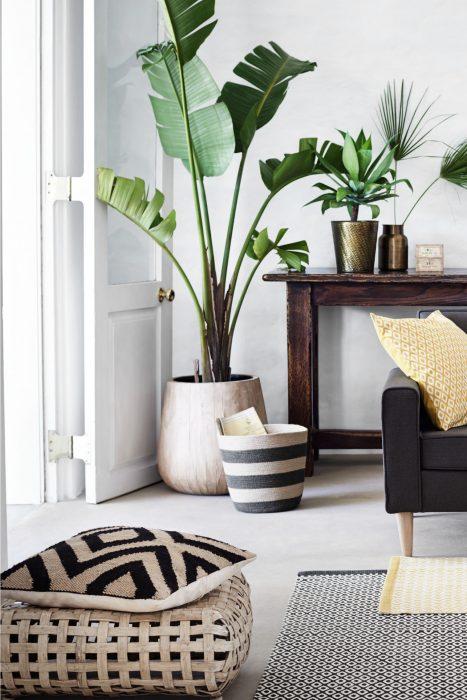 De beste planten voor in jouw huis1